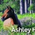 Ashley Heath Static Caravan Holiday Park