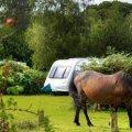 Ocknell  Campsites
