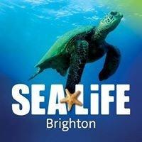 Brighton SEA LIFE Centre