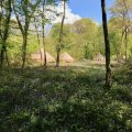 Glamping bell tents at Wild Boar Wood