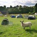 Demesne Farm Bunkhouse & Campsite