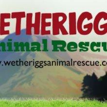 Wetheriggs Animal Rescue