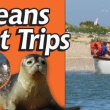 Beans Boat Trips - Seal & Bird Spotting