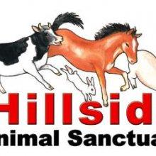 Hillside Animal Sanctuary