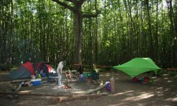 Camping Badgells Wood