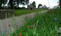 Primitive Meadows Campsite