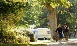 Hollands Wood Caravan Park and Campsite