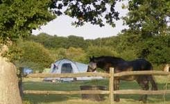 Oakfield Farm Campsite
