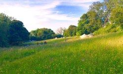 The Sunny Field Campsite