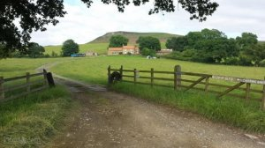 Kildale Camping Barn, Byre and Campsite