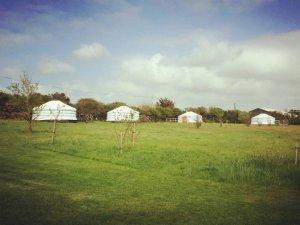 Koa Tree Camp