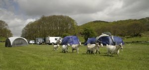 Grizedale Campsite