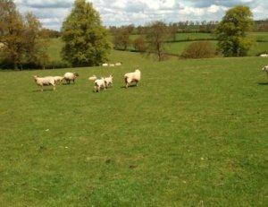 Covert Farm - Northants Caravan Site
