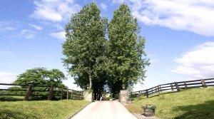 Rushmere Farm Campsite