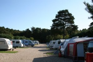 Wareham Forest Tourist Park