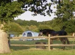 Oakfield Farm Campsite