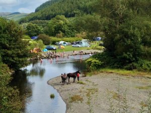 Dol Llys Farm Caravan and Camping Site