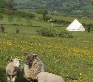 Walkers Cottage Camping