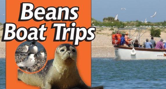 Beans Boat Trips - Seal & Bird Spotting
