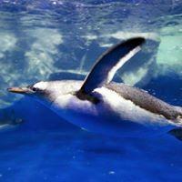 Dingle Oceanworld Aquarium